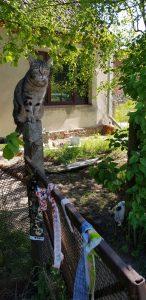 Katze brgrüßt die Besucher der offenen Ateliers Prignitz bei flickli